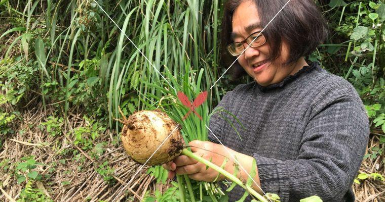 【傳統市場的選物職人】走一趟小農春天的菜園,蔥、韭與其他……