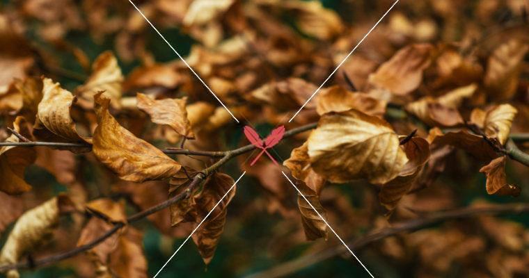 中醫節氣養生:處暑,防疫期間的秋天,針對上呼吸道,如何調養更有抵抗力?