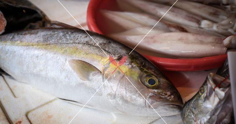 限時開放【深度台灣在地蔬果水產集】紅甘,生魚片料理最愛,一次認識紅、青魽!